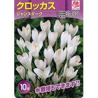 花の球根 富山県産 クロッカス ジャンヌダルク 10球