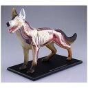 犬解剖モデル 立体パズル 4D VISION 動物解剖 No.18
