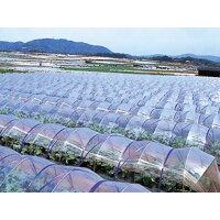 農ポリ 厚さ0.07mm×幅150cm×長さ100m