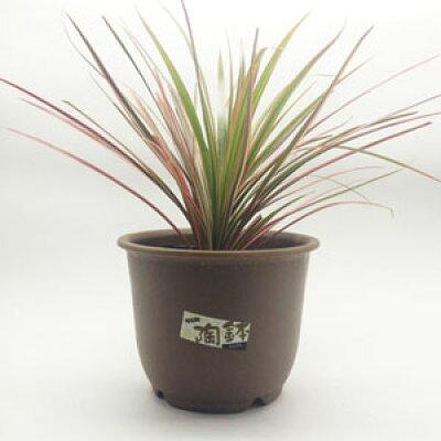 陶鉢 輪型 10号 きん茶(1コ入)