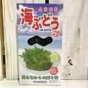 メック 海ぶどう 海水漬け 120g×2