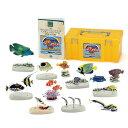 魚類 動物 生物フィギュア 立体図鑑リアルフィギュアボックス コーラルリーフフィッシュ(サンゴ礁に棲む魚の仲間)