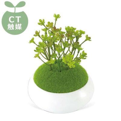 CT触媒加工 インテリア 造花 消臭 アーティフィシャルグリーン 和盆栽 マンネンソウ