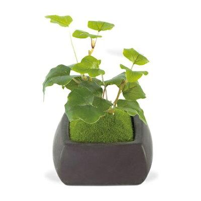CT触媒加工 インテリア 造花 消臭 アーティフィシャルグリーン 和盆栽 オオバコ
