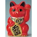 常滑焼 梅月 8号赤小判付招猫 8441