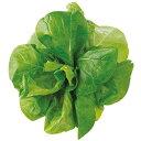 ユーイング Green Farm用種子 水菜 UH-LB02