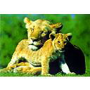 ライオンと子供 ポスター / ポスター
