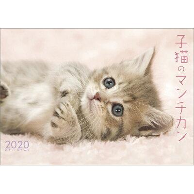 エンスカイ 20カレンダー 子猫のマンチカン