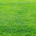 芝の種トールフェスク コロナ1kg