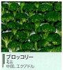 京果食品 冷凍 ミニブロッコリー IQF 500g 業務用
