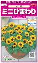 ミニひまわり(小夏)の種 + 植木鉢セット!