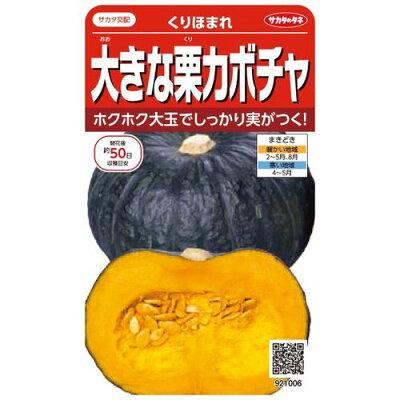 サカタのタネ 実咲野菜1006 大きな栗カボチャ くりほまれ 00921006