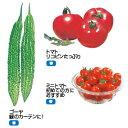 サカタのタネ 野菜の種 ピーマン