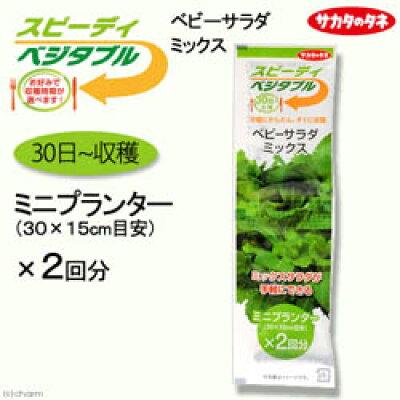 伊藤忠リーテイルリンク株式会社 サカタのタネ SVベビーサラダミックス 1袋