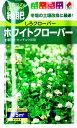 (種子)ホワイトクローバー(シロクローバー)タキイのタネ