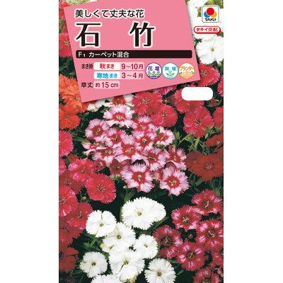 タキイ種苗 花種 石竹 F1 カーペット混合 B04-012 M