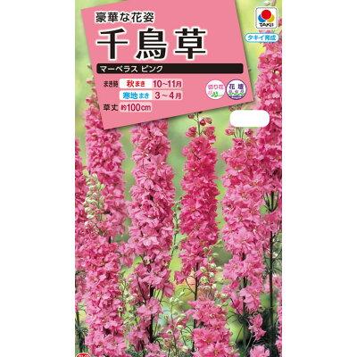 タキイの種 千鳥草マーベラス ピンク