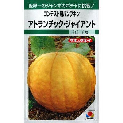 カボチャ タキイ種苗 アトランチィク ジャイアント タキイ種苗の巨大カボチャの種です