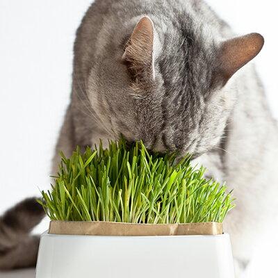 ハリオ 猫草栽培キット にゃんベジセット PTS-NKC-2P(1セット)