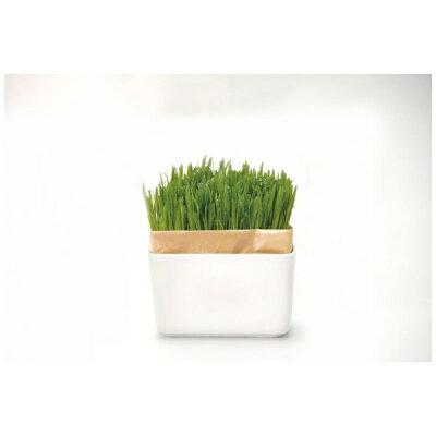 猫草栽培キットharioにゃんベジ 鉢 鉢 + リフィル   無農薬cat's veg ハリオ製 にゃんべじ