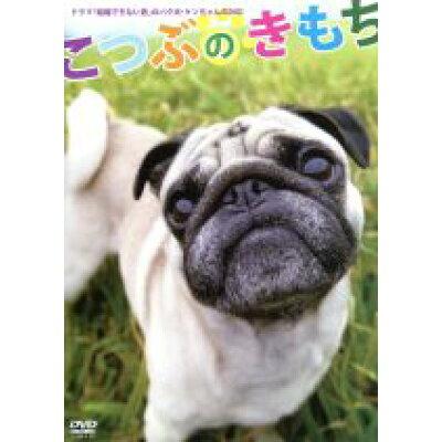 こつぶのきもち/DVD/PCBG-10824