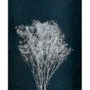 大地農園/スーパーソフトミニカスミ草 20gシルバー/00020-912 プリザーブドフラワー 花材 カスミ草 大地農園:カスミ草 スーパーソフトミニカスミ草
