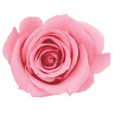 大地農園/ローズ・ミミ 9輪 プリンセスピンク/03840-181 プリザーブドフラワー 花材 ローズ 大地農園 ローズ・ミミ