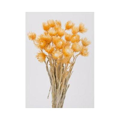 大地農園/ミニシルバーデージー 25g ツートンオレンジ/76-32001-350 プリザーブドフラワー 花材 大地農園:ドライフラワー スモールフラワー シルバーデージー