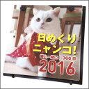 2016年カレンダー / 日めくりニャンコ! 2016年卓上カレンダー