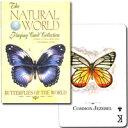 (美しくカードに舞うチョウ)ナチュラル・ワールド 世界の蝶
