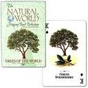 ナチュラル ワールド 世界の木