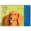 壁掛け 2021年 カレンダー ダックス犬川柳 スケジュール いぬ 動物写真 書き込み インテリア 令和3年 暦
