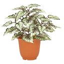 ベゴニアブッシュ x 5グリーンホワイト観葉植物フェイクグリーン