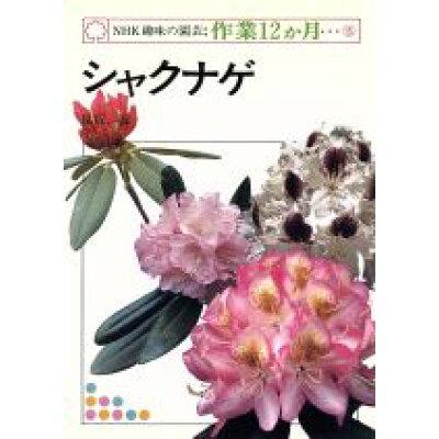 シャクナゲ   /NHK出版/脇坂誠