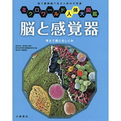 脳と感覚器 考えて感じるしくみ  /小峰書店/宮澤七郎