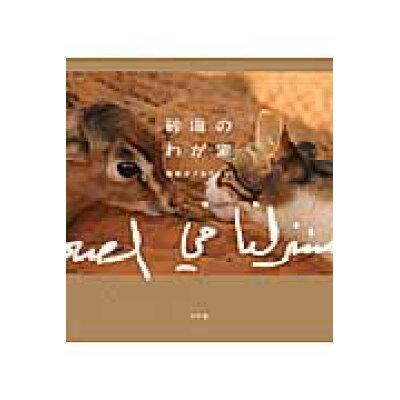 砂漠のわが家   /幻冬舎/ミナコ・アルケトビ