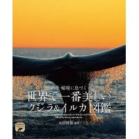 世界で一番美しいクジラ&イルカ図鑑 絶景・秘境に息づく  /誠文堂新光社/水口博也