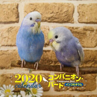 大判カレンダーコンパニオンバードインコ&オウム  2020年 /誠文堂新光社/大橋和宏