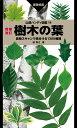 樹木の葉 実物スキャンで見分ける1300種類  増補改訂/山と渓谷社/林将之