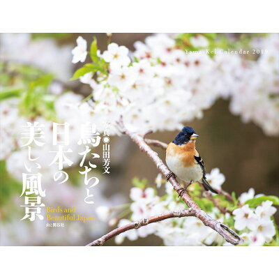 鳥たちと日本の美しい風景カレンダー   /山と渓谷社