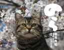 猫カレンダーのら  2021 /辰巳出版