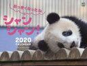おっきくなったねシャンシャン!カレンダー  2020 /〓出版社/高氏貴博
