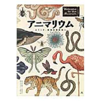アニマリウム ようこそ、動物の博物館へ  /汐文社/ケイティ・スコット