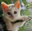 White cat 子猫の小さな冒険  /Jパブリッシング/吉野信