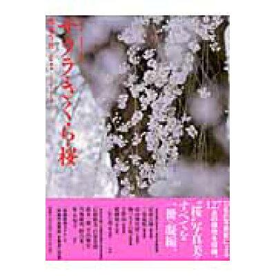サクラ・さくら・桜 写真集  /ブティック社/隔月刊『風景写真』編集部