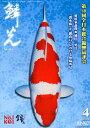 鱗光 錦鯉の専門誌 No.604(2018 4) /新日本教育図書