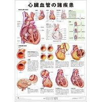 ミニポスタ-心臓血管の諸疾患   /アプライ