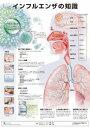 ミニポスタ-インフルエンザの知識   /アプライ