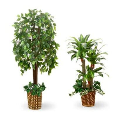 人工観葉植物 光触媒 ベンジャミン 70×160cm + 幸福の木 60×100cm