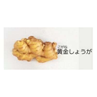 坂田信夫商店 高知県産 黄金生姜 1kg